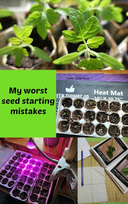 mistakes, starting seeds.