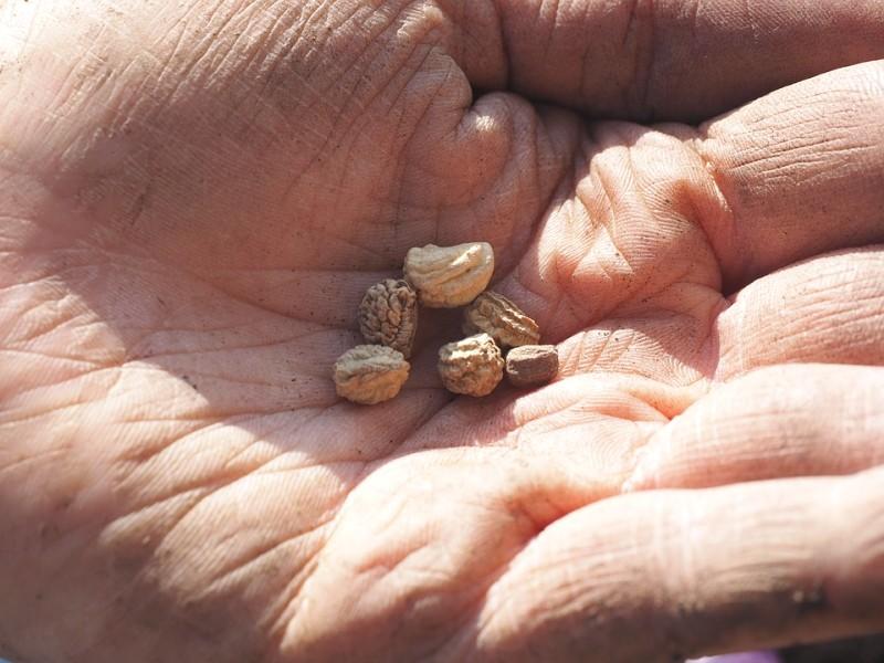 A semente da verdade (conto oriental)