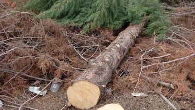 68χρονος καταπλακώθηκε από δέντρο χάνοντας τη ζωή του