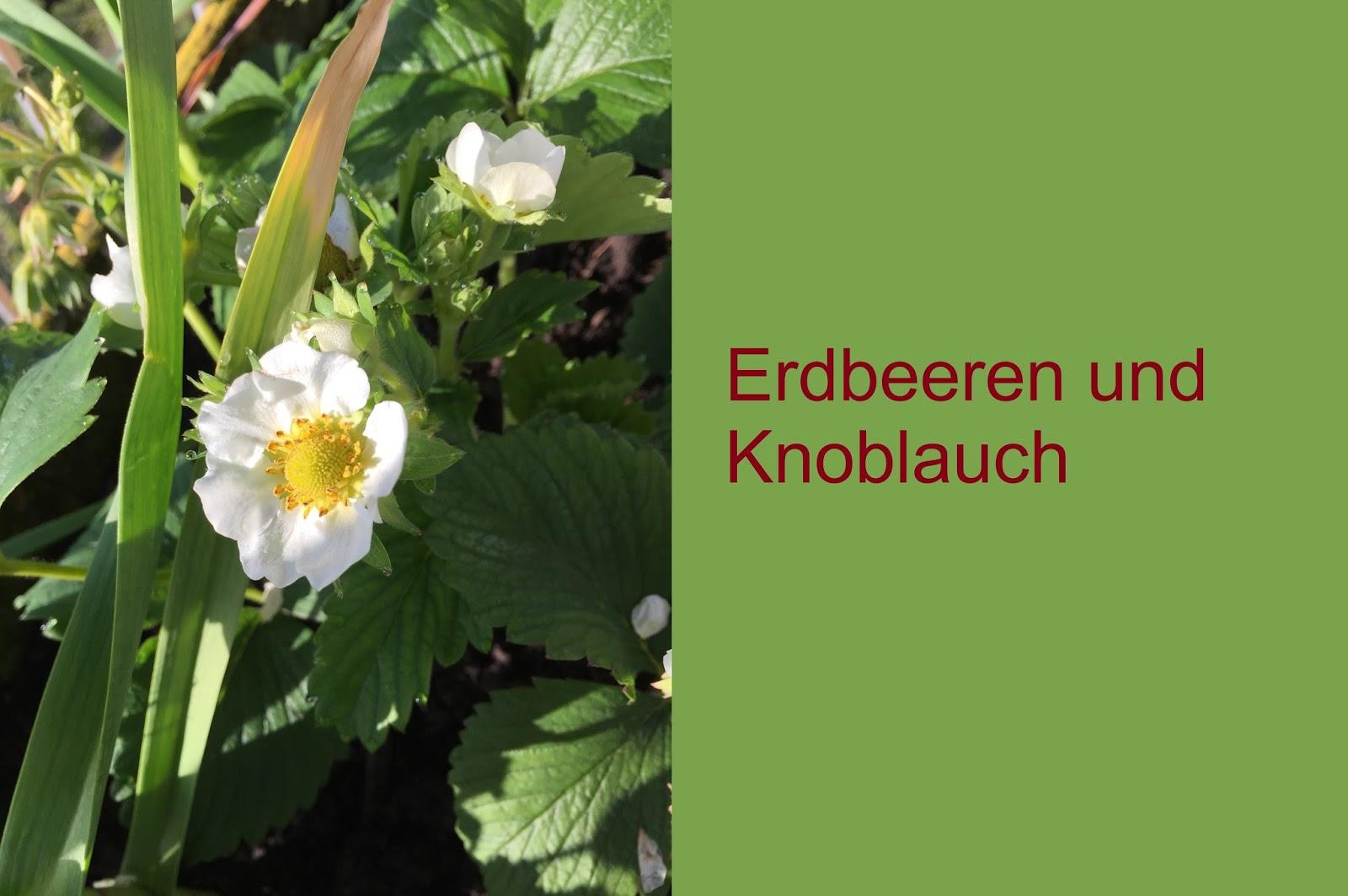 edgarten pflanzenfeinde und freunde mischkultur und fruchtfolge. Black Bedroom Furniture Sets. Home Design Ideas
