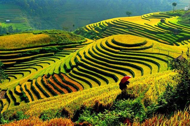Ngon! Vietnam