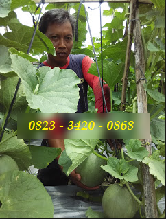 AGEN NASA DI Meurah Dua Pidie Jaya - TELF 082334020868