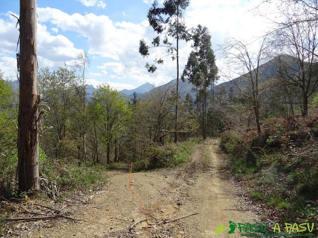 Pista forestal bajando a Dego. Desvío a la izquierda.