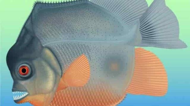 Piranhamesodon pinnatomus, το αρχαιότερο σαρκοβόρο ψάρι με σκελετό από κόκαλα