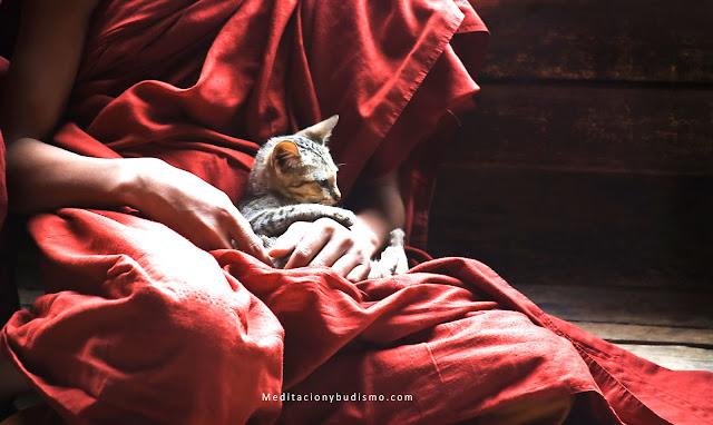La unión entre los gatos y el Budismo - Leyenda
