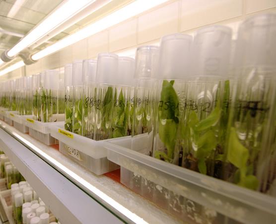 Modern plant breeding