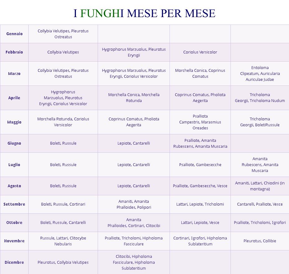 Calendario Funghi.Come Coltivare Funghi In Casa E Quanto Costa