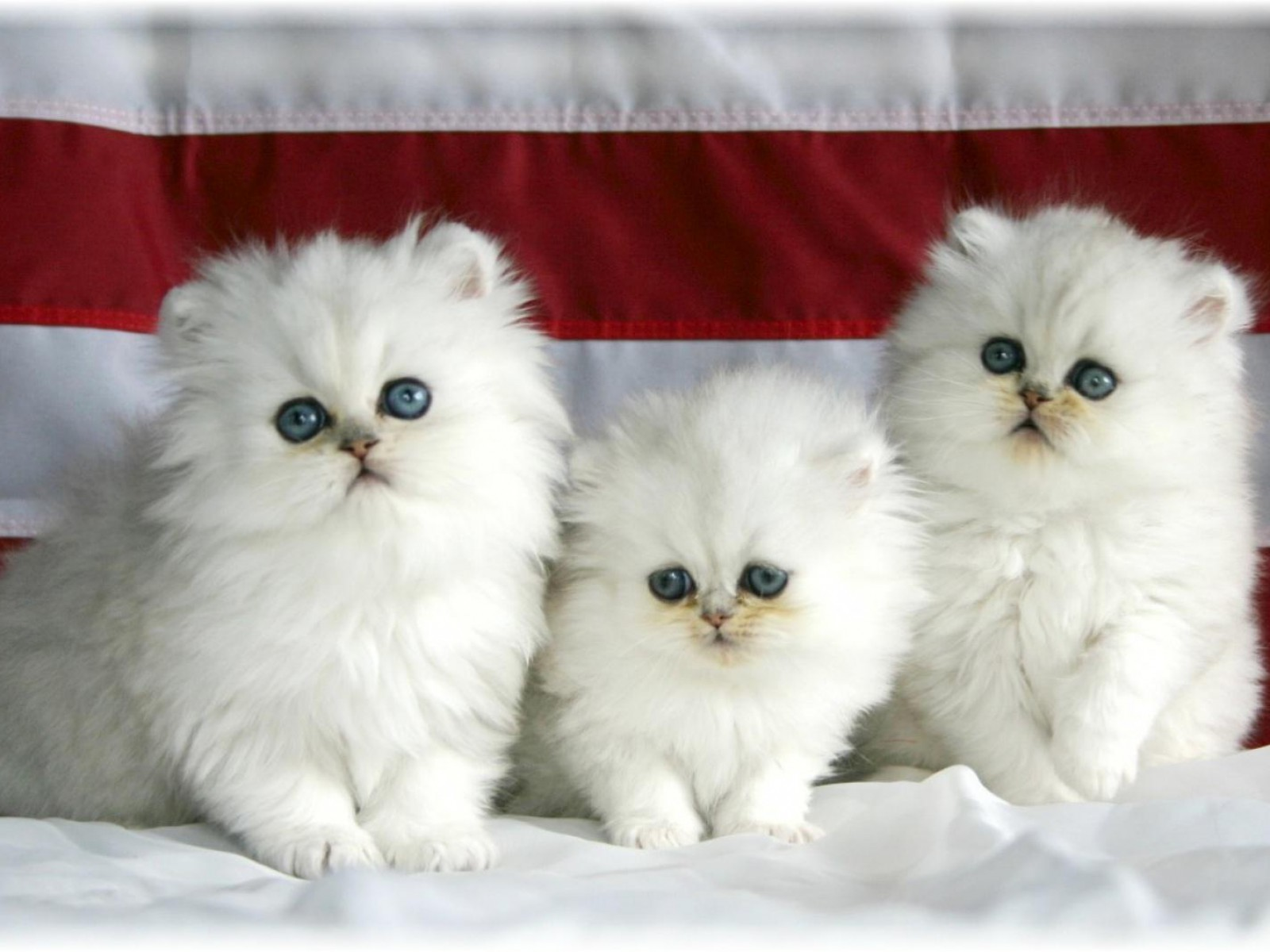 Persian Chat