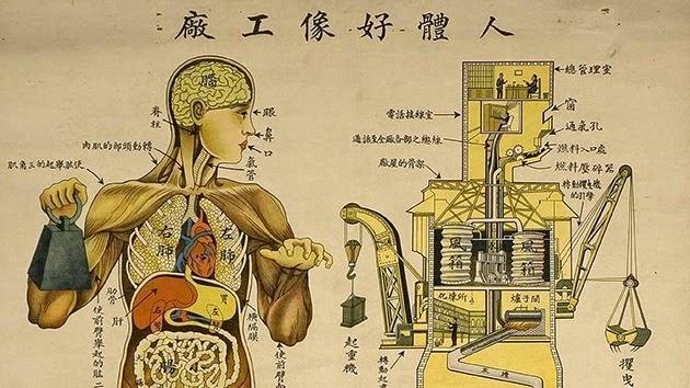 Anatomía \'made in China\': El cuerpo humano funciona como una fábrica