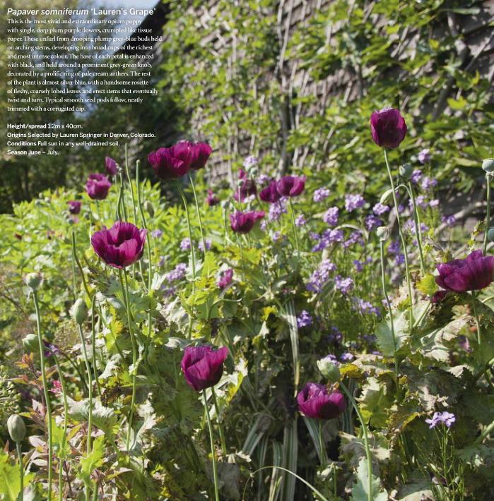 Plantas estivales recomendadas por jefe de jardineros de Great Dixter, Fergus Garrett