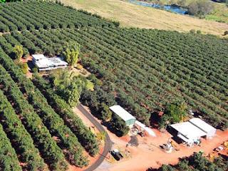 Sengsara Pemetik Buah Di Australia
