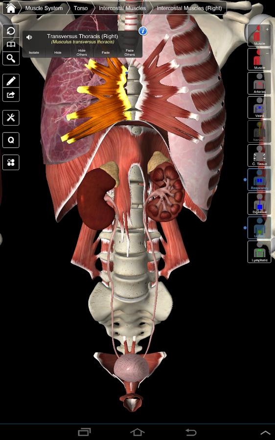 تحميل essential anatomy 3 مجانا