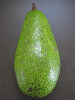 Costa Rica avocado