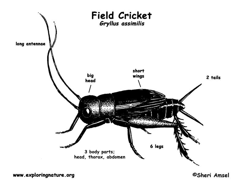 Invertebrate Experts 2016