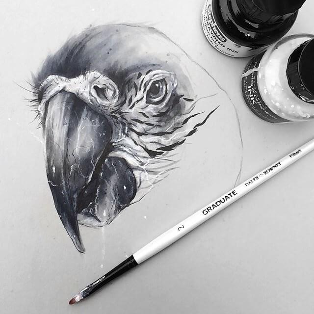 09-Parrot-SW-Whiteside-www-designstack-co