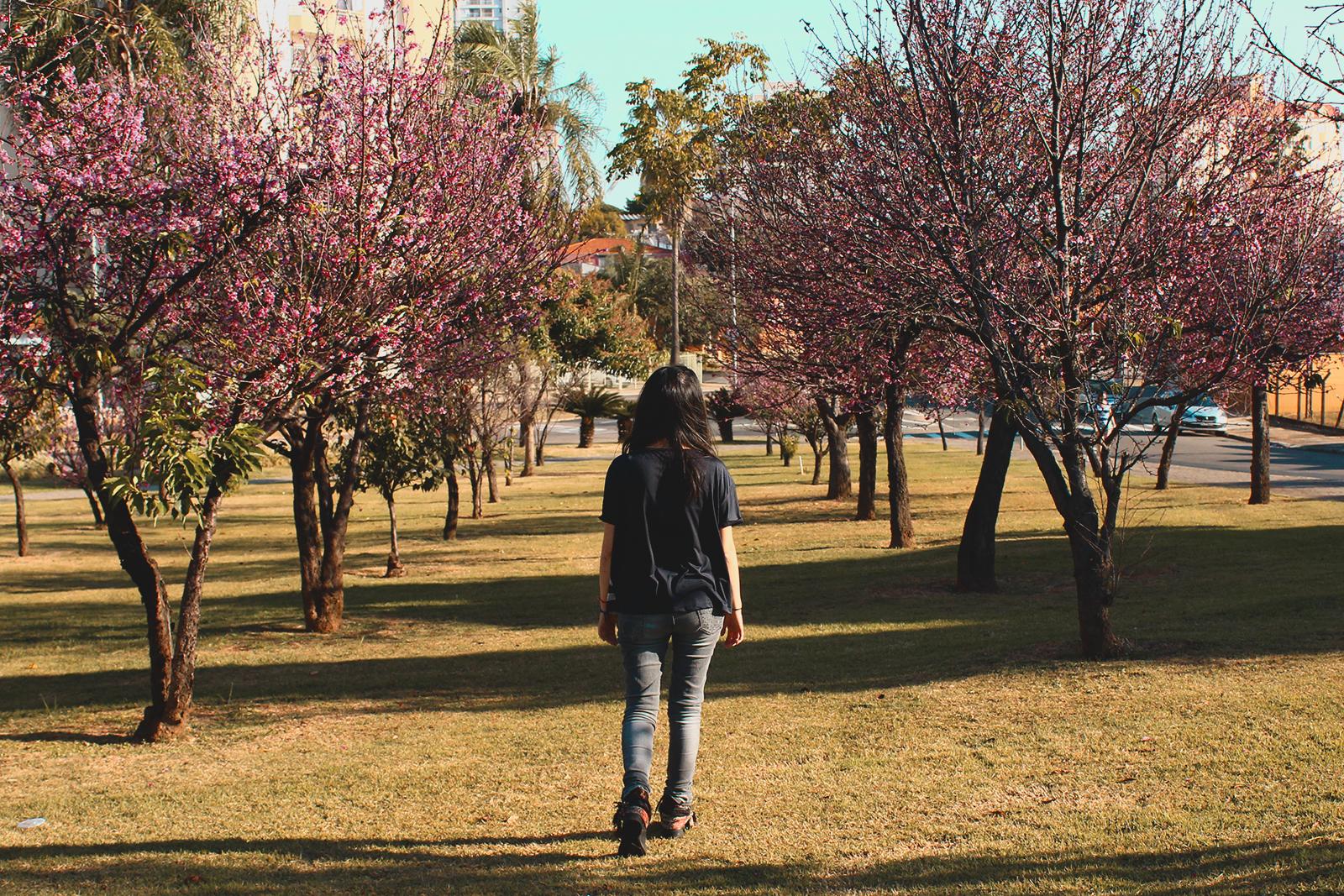 caminhando entre cerejeiras