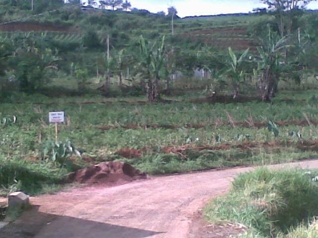 Foto(5389) Di Jual Tanah Murah 96 Ha Lokasi Kawasan Puncak Jual tanah di cipanas jual tanah di puncak