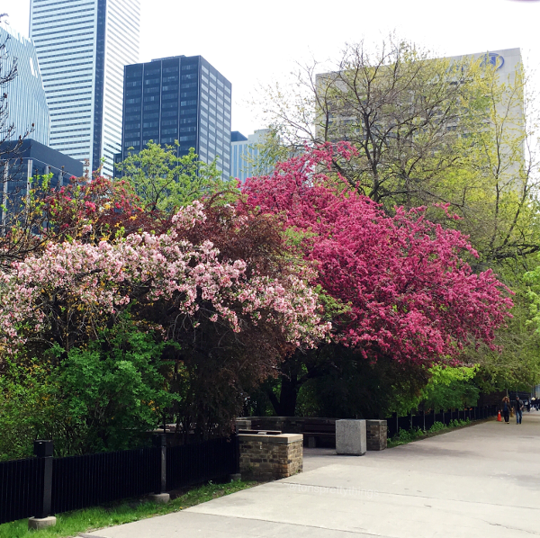 Springtime Florals and Trees - Toronto - Tori's Pretty Things Blog