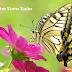 Harmonica Tab - Cánh Bướm Vườn Xuân (Tremolo - Diatonic)