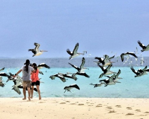 Travel.Tinuku.com Ngurtafur beach on Warbal island sensation white sand bridge, swim, snorkeling and watch flock of pelicans