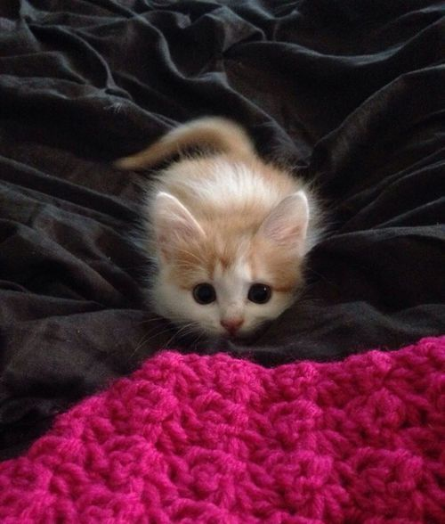 Cat In The Blanket
