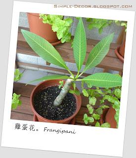 http://simple-decor.blogspot.tw/2016/01/greeny-garden-frangipani.html