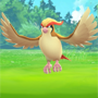 Pokemon GO: Pidgeot
