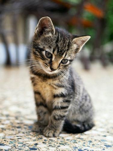 Cara Memilih Nama Kucing Yang Baik