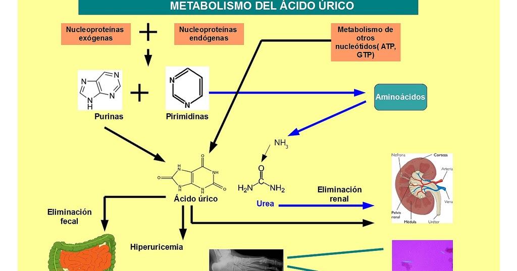 como bajo el acido urico alto dieta para pacientes con gota calmar dolor por acido urico