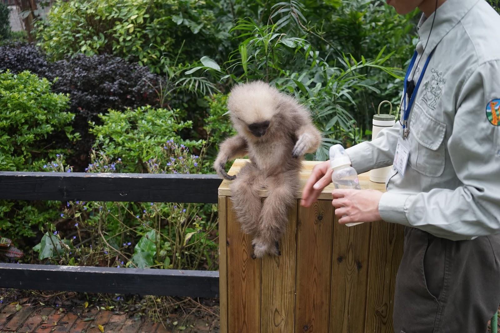 chimelong safari park guangzhou