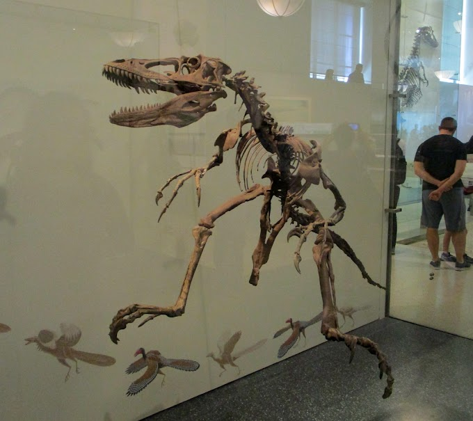 American Museum of Natural History, part 2: birds, near-birds, and wide loads