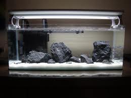 Cara Menjernihkan Air Aquarium Dengan Arang