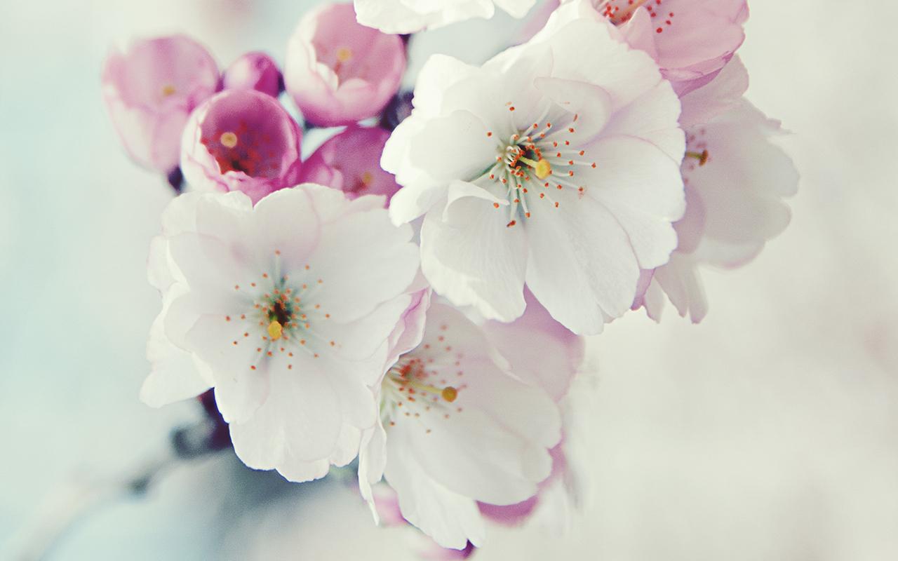 Gambar Bunga Yang Paling Cantik