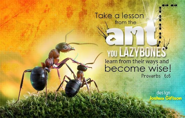 Lesson from Ant Sermons Wallpaper