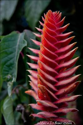 Beautful flower, colombia, Rio Caqueta, Chris Baer
