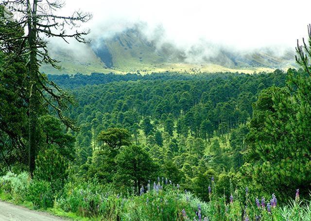 Diputados aprueban ley forestal que impide la participación civil en temas sobre bosques