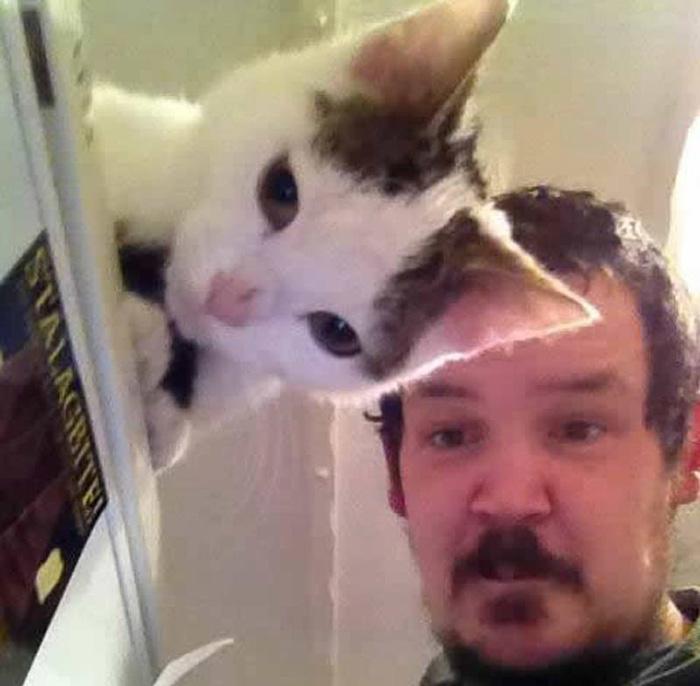 Through Cat