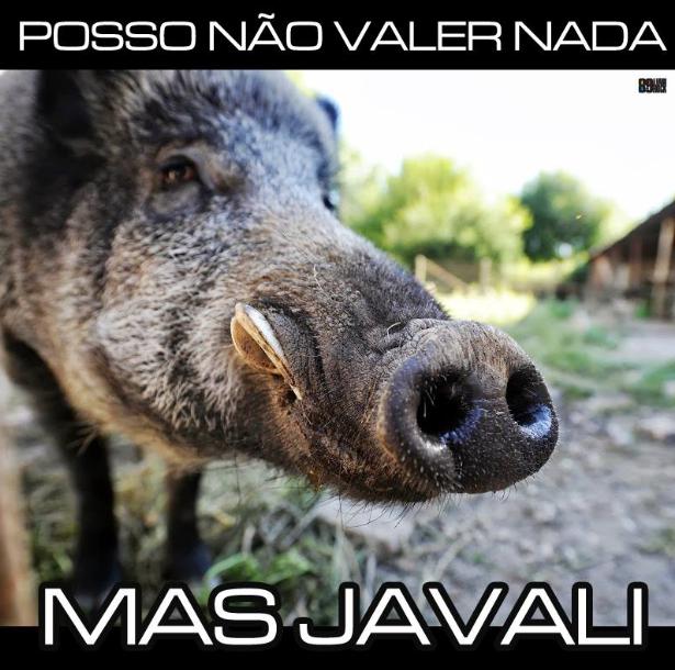 javali.png (615×610)