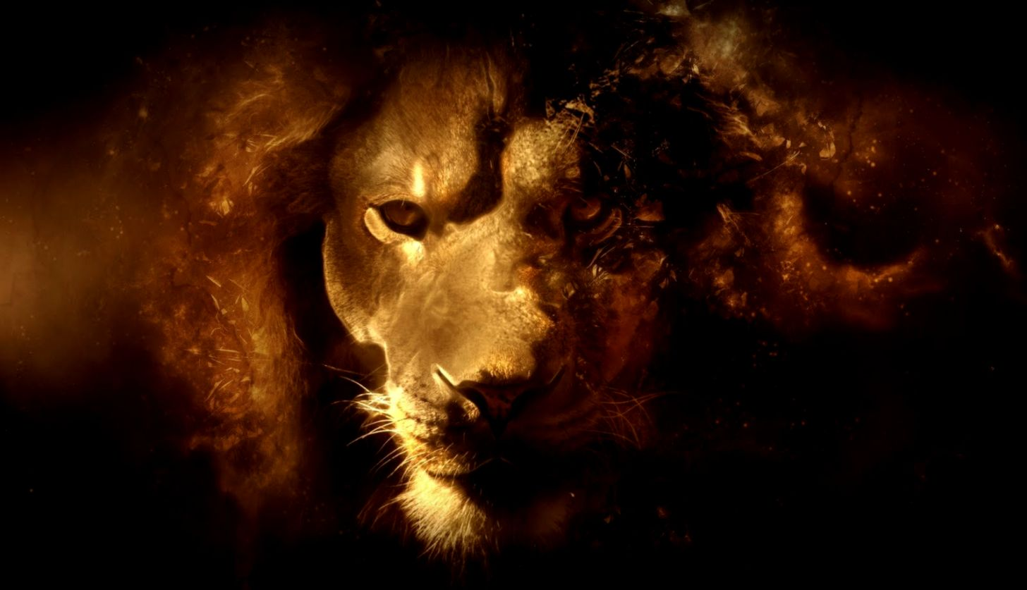 Lion Hd Wallpapers Wallpapers Pc