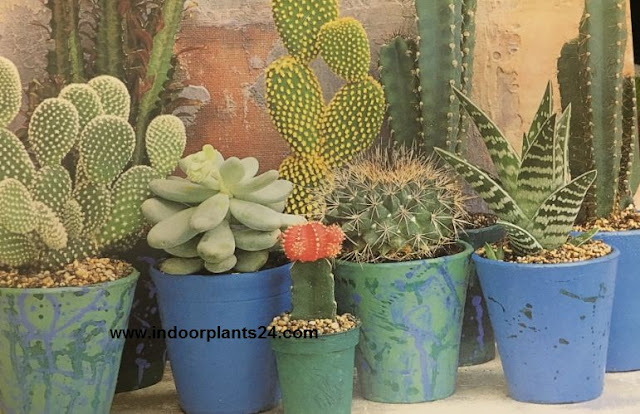 images about House Plant Deco