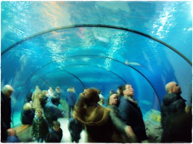 Vista do túnel, no aquário do zoológico de Rotterdam