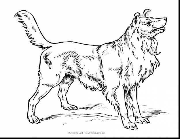Great Real Dog Coloring Pages With Coloring Pages Of Dogs And Coloring Pages  Of Cute Dogs