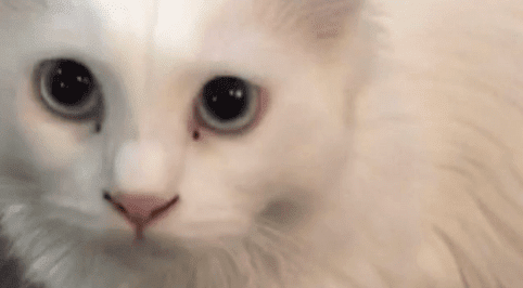 سلمان معذب القطط