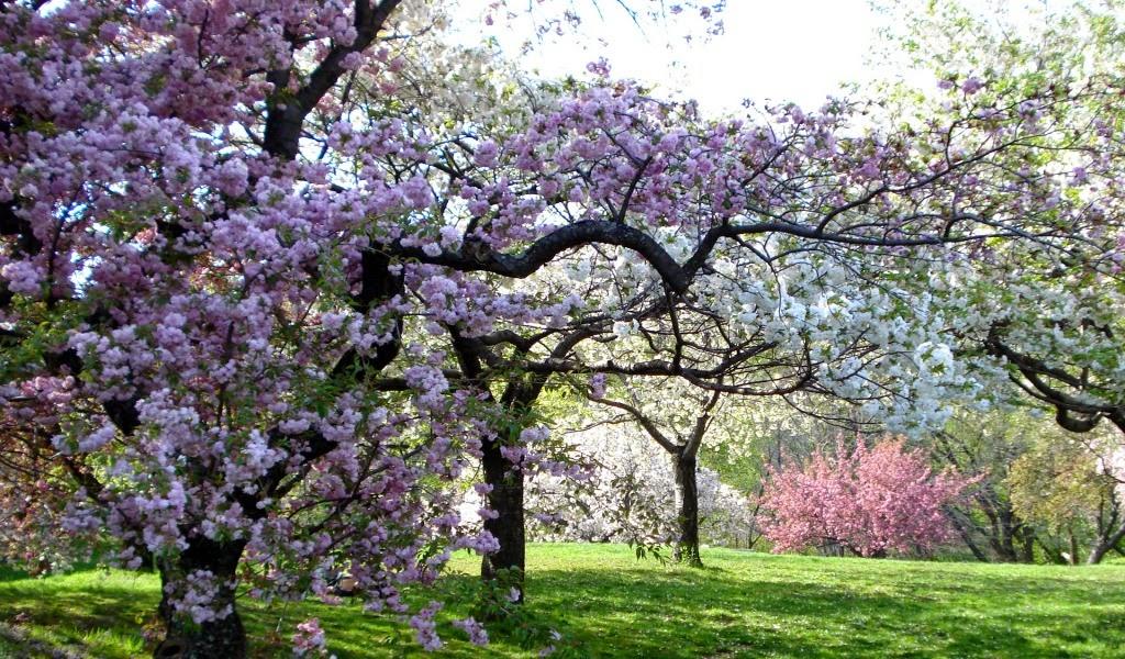 1024x600 Pozadine Za Desktop Botanicki Vrt U New Yorku