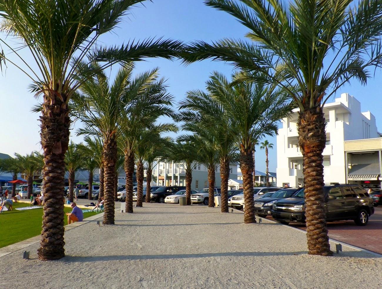Seaside Florida, Seaside, Florida, Palm Trees, Trendy in Texas Blog