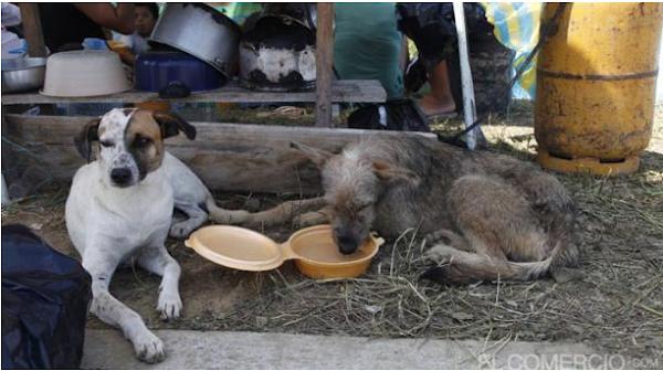 Voluntarios ayudan a los animales afectados por el sismo en Pedernales