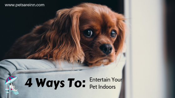 Entertain Indoor Pets