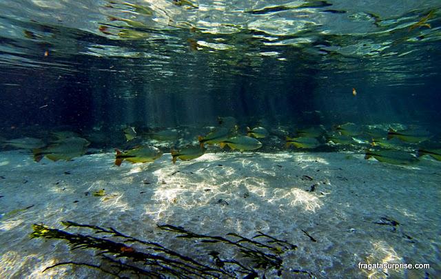 Mergulho em uma nascente de Bonito, Mato Grosso do Sul