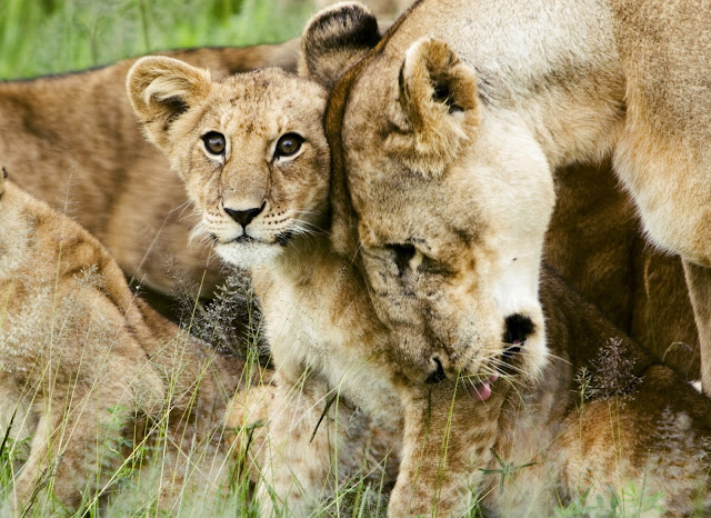 Portable DNA kit to combat wildlife crime in Africa