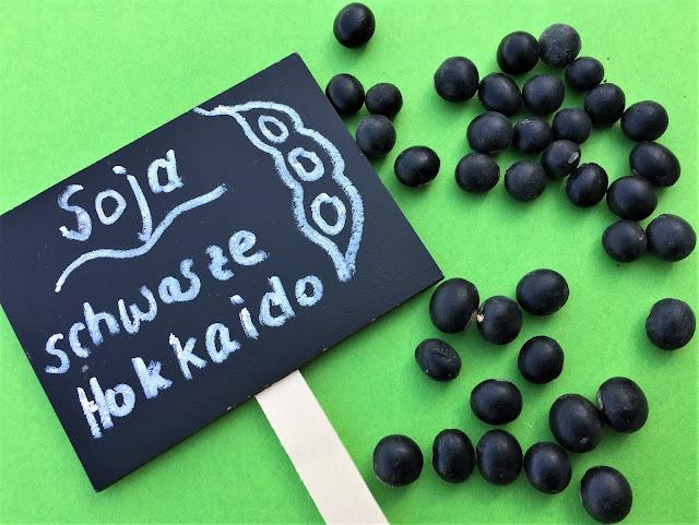 schwarz glänzende Sojabohnen